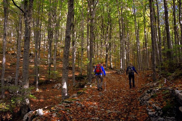 nordic walking v lese.jpg